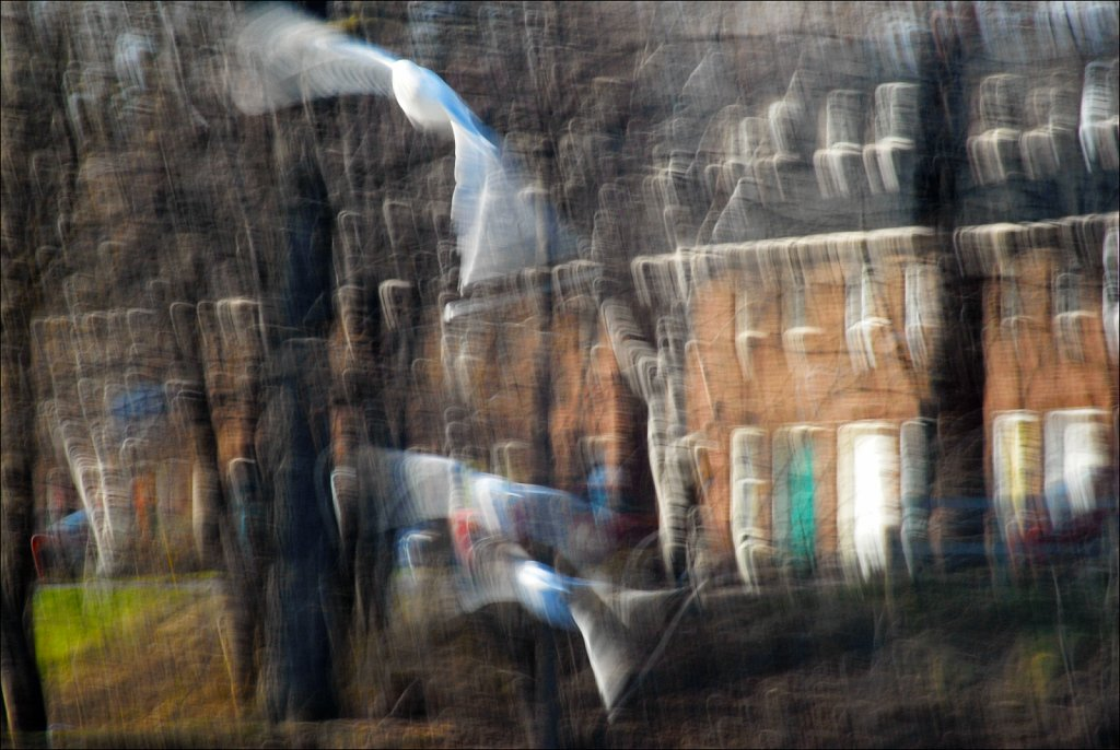 2007-04-24-17-24-19-1-x-Edit-PRINT-Strange-Flock.jpg
