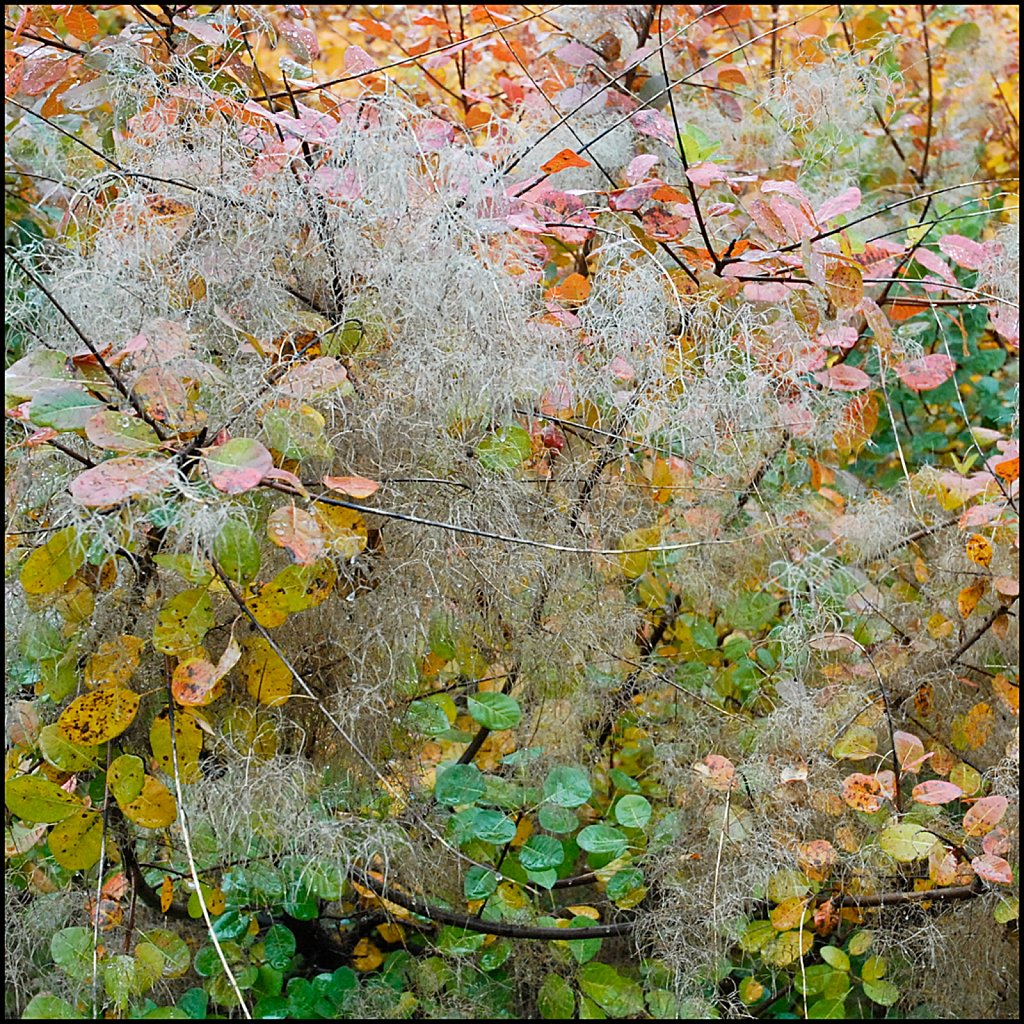 Fall08-07-ms-2007-10-27-14-01-03-PRINT.jpg