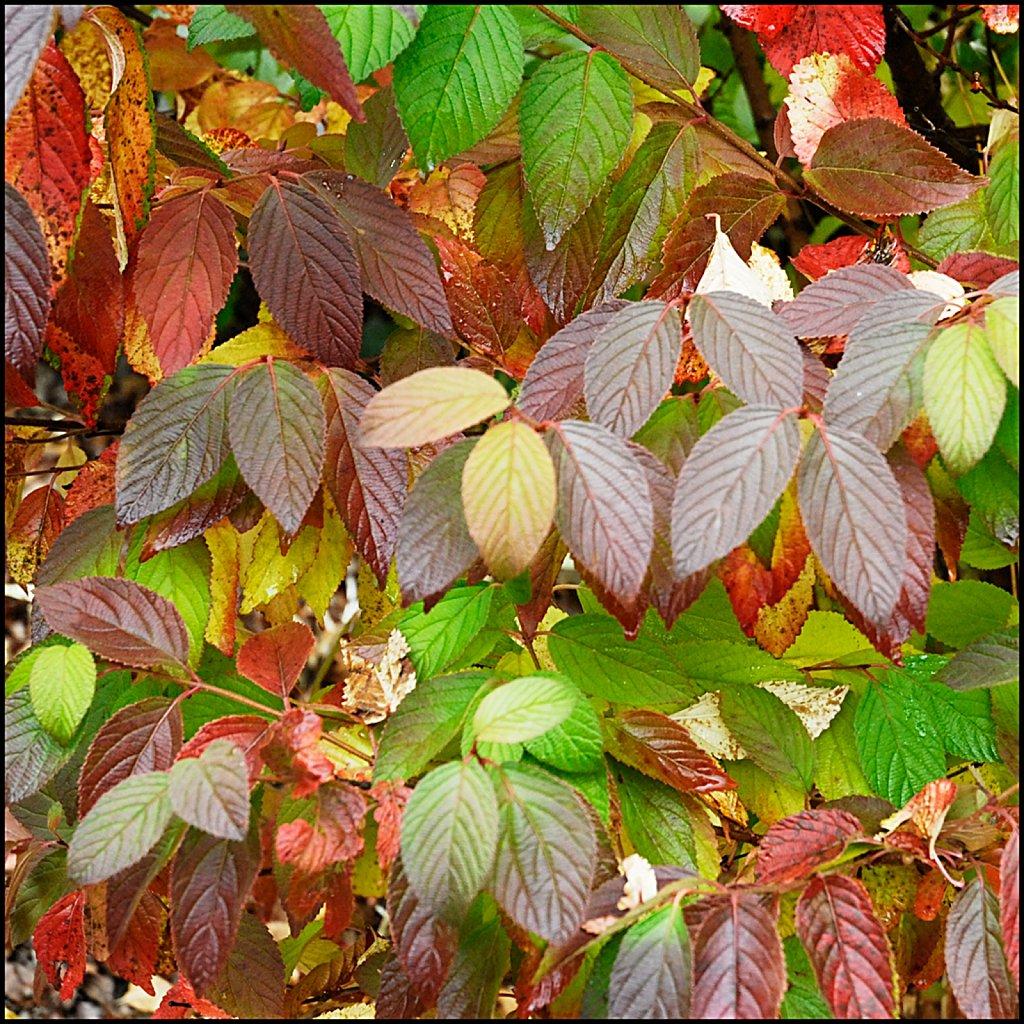 Fall08-17-ms-2007-10-27-14-57-43-PRINT.jpg