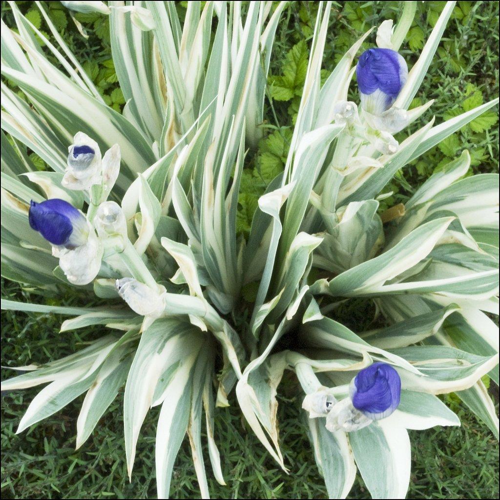 Spring09-04-2008-06-01-11-20-26-16Bit-PRINT.jpg