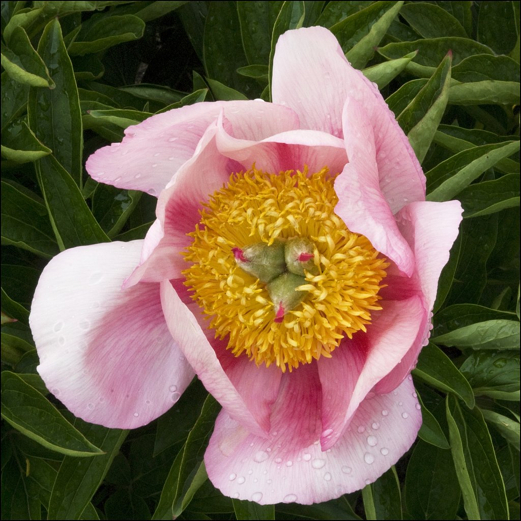 Spring09-05-2008-06-01-11-30-01-16Bit-PRINT.jpg