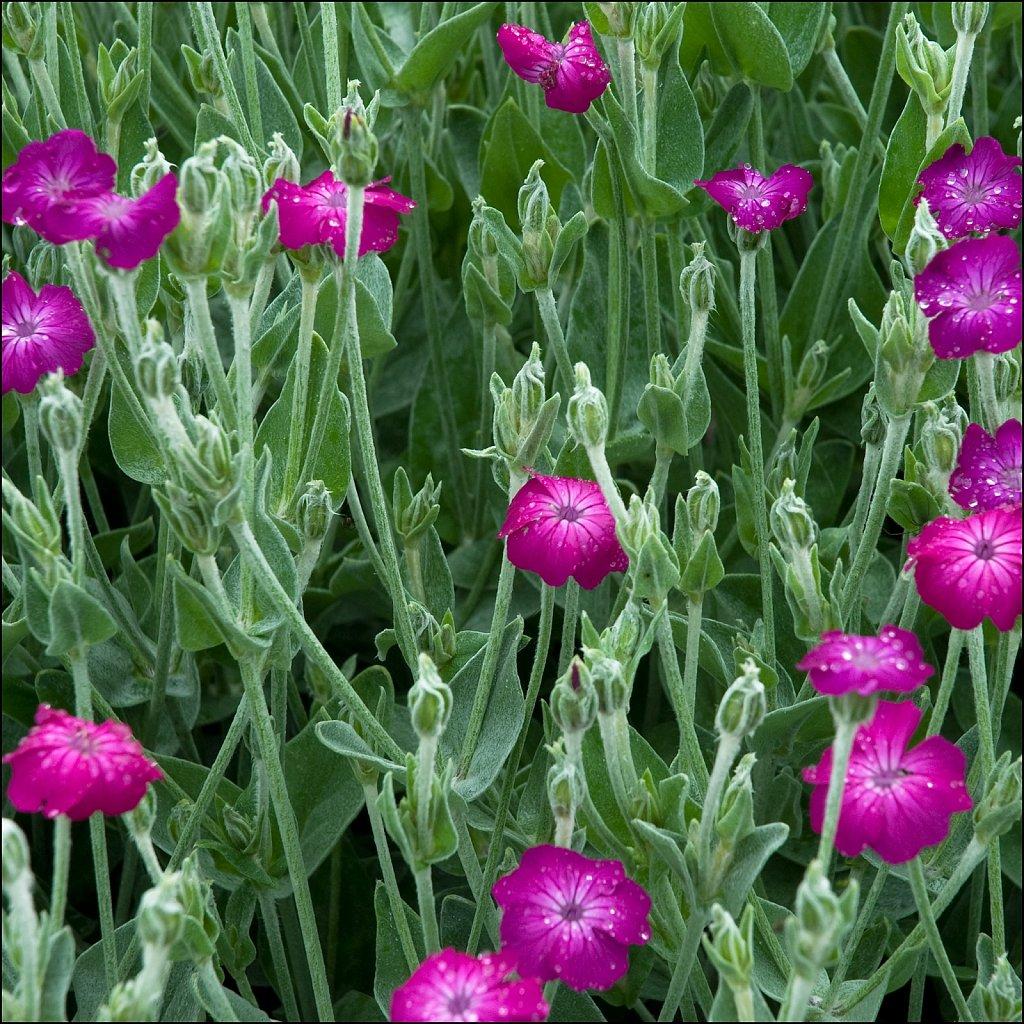Spring09-22-2008-06-22-09-26-15-PRINT-16bit.jpg
